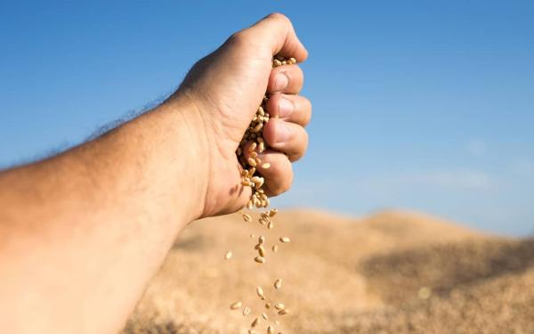 We add tradition and innovation in our commitment to organic feed